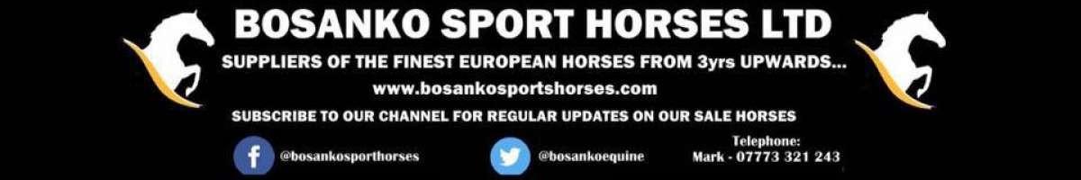 Bosanko Sports Horses