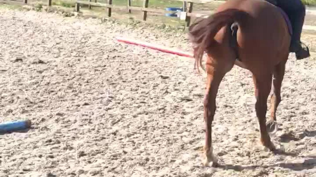 Bree Lanyon / Marmalade Escapade