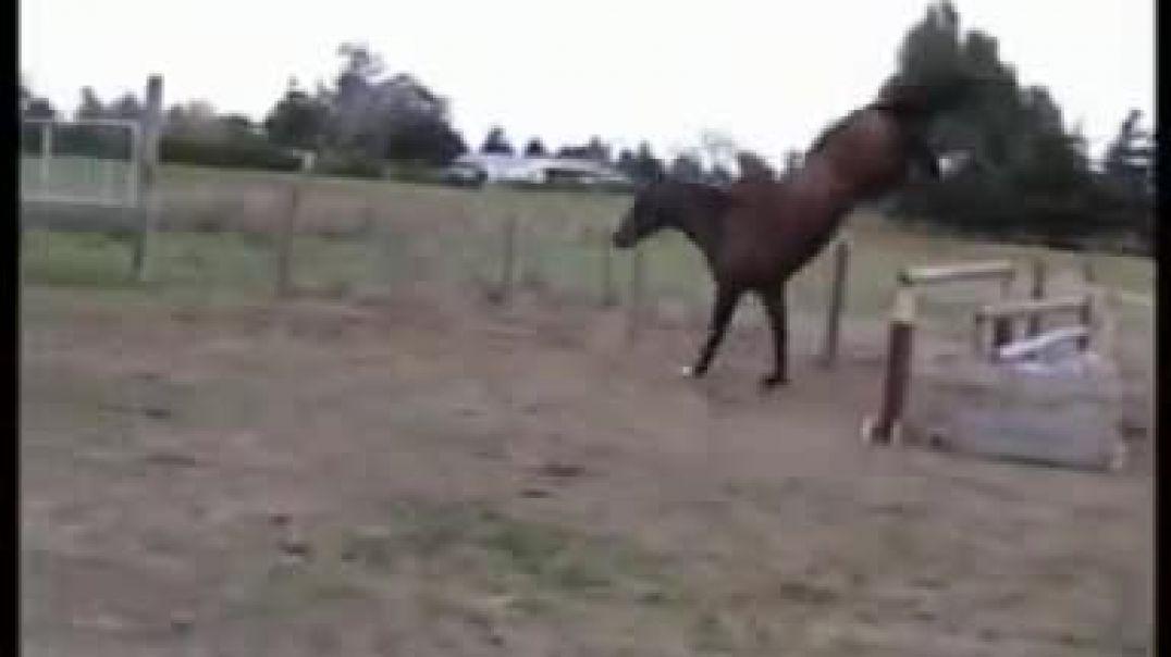Corlando freejumping