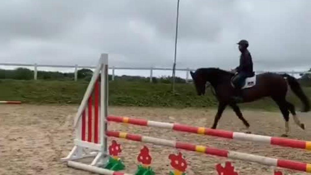 Kannan x iroko x belisar(2012)gelding, training