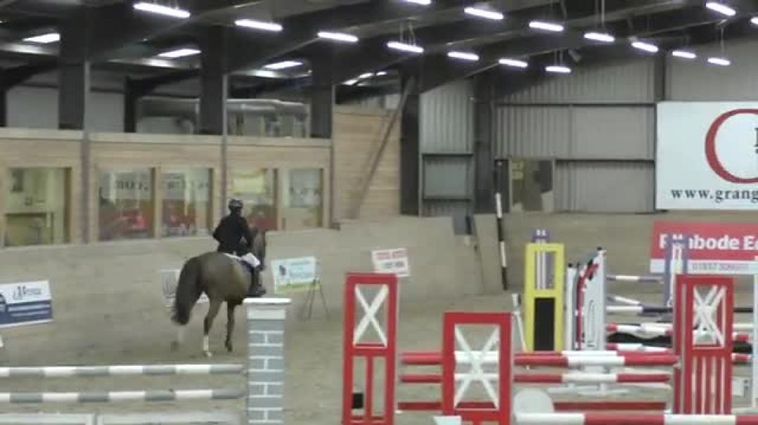 Kannan x iroko x belisar(2012)gelding , first ever show 1m, The Grange