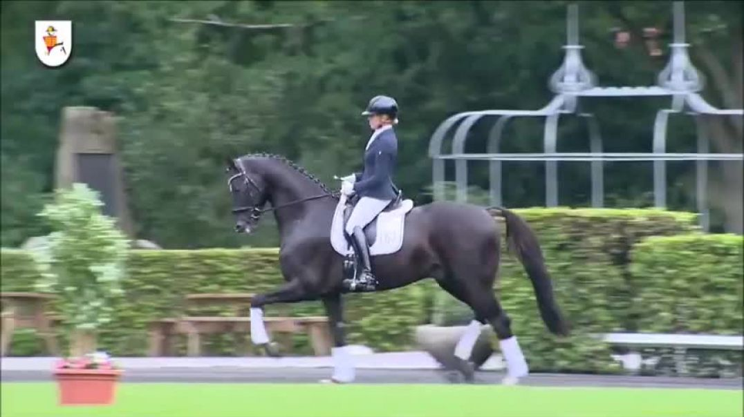 LIVALDON- Hannover dressage stallion