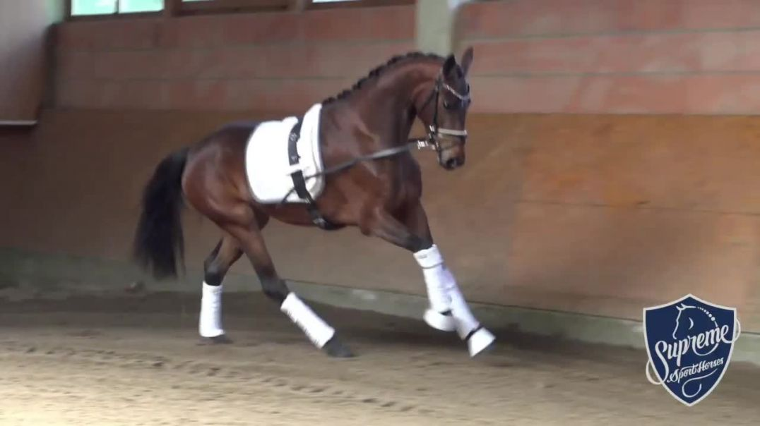 -Giselle- 2017 Mare by Grand Galaxy